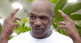3 Fakta Usaha Ganja Mike Tyson, Hasilkan 5,04 Miliar