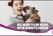 5 Ras Anjing Terbaik yang Cocok Jadi Hewan Peliharaan