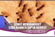 Pakai 6 Bahan Dapur Ini, Semut di Rumah Pasti Hilang