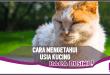 Cara Mudah Ketahui Usia Kucing, Perhatikan Bagian Ini