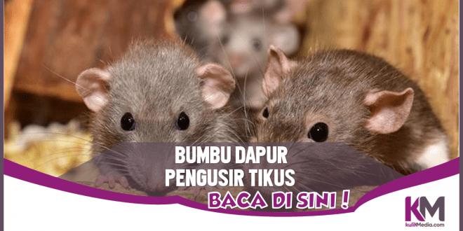 6 Bumbu Dapur Pengusir Tikus yang Patut Dicoba